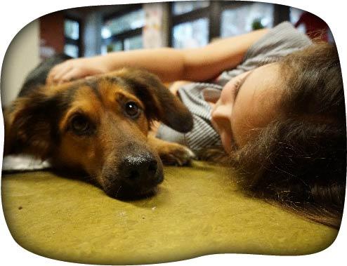 Hund und Kind Seminare -Hundeführerschein-50