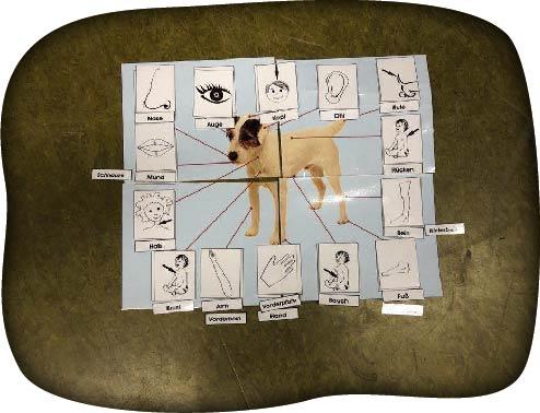 Körperteile des Hundes-50