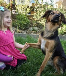 Tiergestützte Therapie-Therapiehund-hilft-Mädchen