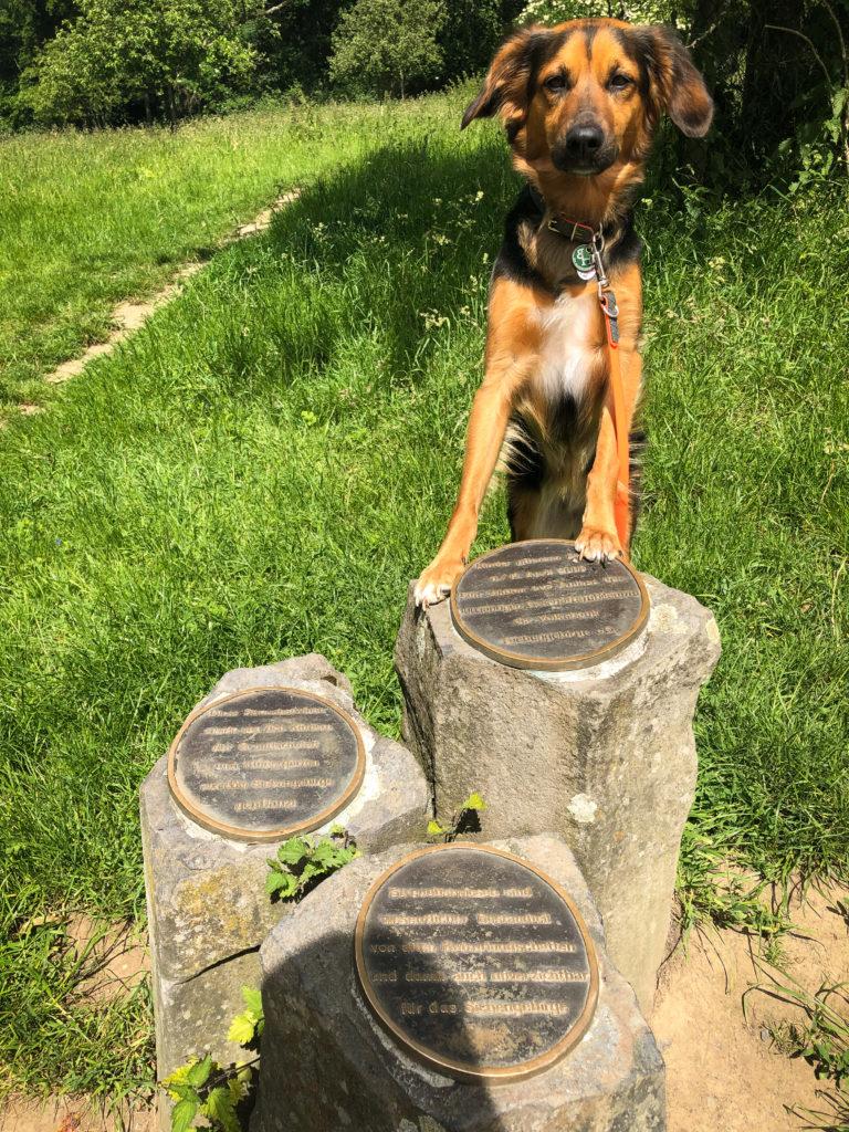 Hund fotografiert mit Denkmal zur Streuobst-Aktion von Kindern aus dem Siebengebirge